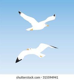 Seagull in the sky. Illustration, elements for design.