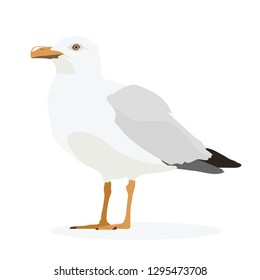 Seagull standing isolated on white. Vector, illustration.