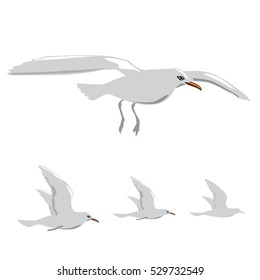 seagull vector.