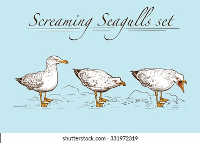 Seagulls behavior. Set of 3 original wild life drawings representing standing and screaming seagulls. Sketch with a white silhouette on a blue background. EPS10 vector illustration.