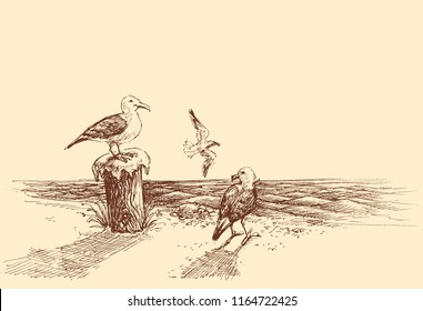Seagulls on the beach sketch