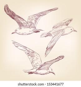 seagulls set  hand drawn vector llustration realistic sketch