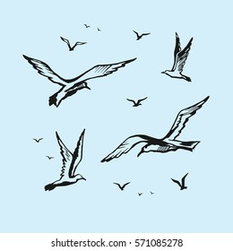 Seagulls vector sketch drawing by hand. Birds in flight are isolated.