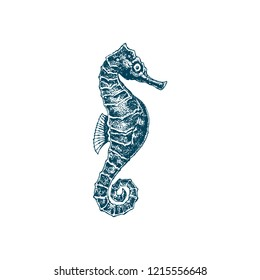 Seahorse vector. Sea dweller seahorse