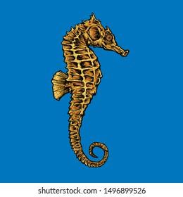 Seahorses are strange animals but that's good