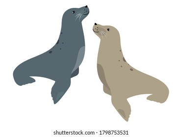 Seal couple cute sea animal icon isolated on white, vector illustration