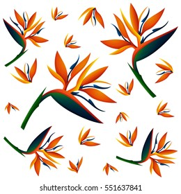 Seamless background with bird of paradise flowers illustration
