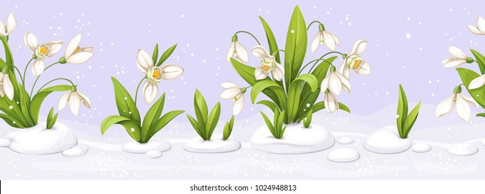 Seamless border from snowdrop making the snow through the snow and flowers on violet background