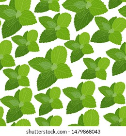 Seamless botanical pattern with mint. Vector illustration. White background. Hand drawing mint plant. Wrapping paper, fabric, cover.