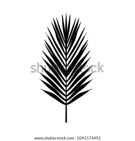 Seamless color palm leave. Flat style. Black and white. illustration design graphic