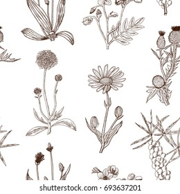Seamless decorative pattern with herbs. Vector illustration.