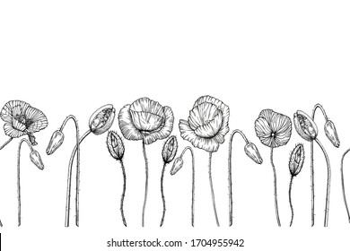 Seamless floral border with poppies. Black contours of wildflowers on a white background. Vector horizontal drawing. Illustration by hand.