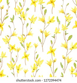 Seamless floral pattern with blossoming yellow flowers and green leaves branches Forsythia. Vector spring illustration on white background in watercolor style.