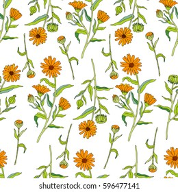 Seamless floral pattern, Calendula flower isolated on white background, botanical hand drawn doodle vector illustration marigold for design package tea, cosmetic, greeting card, wedding invitation