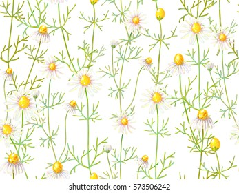 Seamless floral pattern with chamomile flowers. Summer background. Herbal medicine. Vector illustration. Perfect for wallpapers, pattern fills, web page backgrounds, surface textures, textile