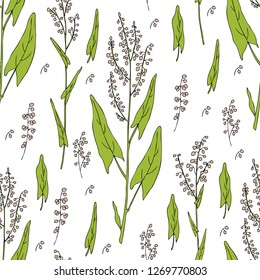 Seamless floral pattern Sorrel plant vector hand drawn illustration isolated on white background, ink sketch, decorative herbal colorful medical herbs for design cosmetic, natural medicine, kitchen