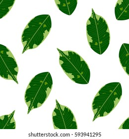 Seamless foliage pattern. Detailed botanical illustrations of exotic leaves ficus.