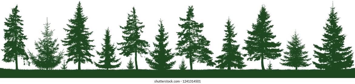 Seamless forest fir trees silhouette. Parkland, park, garden. Isolated, separate objects. Coniferous green spruce. Christmas tree, cedar, fir-tree, pine, pine-tree, Scotch fir. Vector illustration