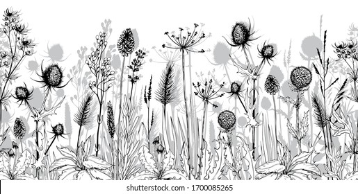 Seamless horizontal background with black and white herbs and flowers. Hand drawn illustration isolated on white.