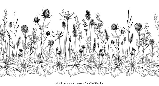 Seamless horizontal background with thistle, burdock, wild herbs and flowers. Hand drawn illustration isolated on white.