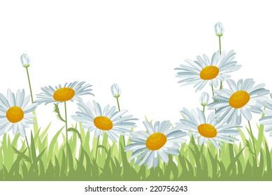 Seamless horizontal background with white daisies