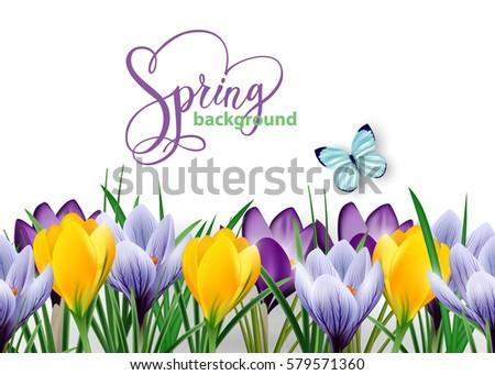 Seamless Horizontal Border Spring Flowers Crocuses Stock Vector
