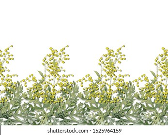 Seamless horizontal pattern of wormwood. Artemisia absinthium. Wormwood branch, wormwood flowers and leaves . Cosmetics and medical plant. Vector illustration.