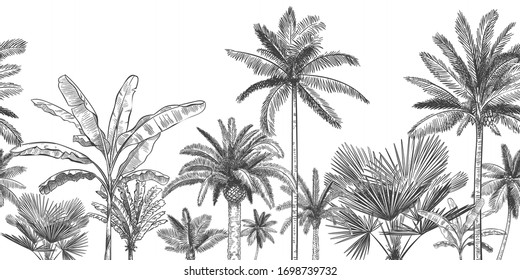 Seamless horizontal tropical background. Hand drawn palm trees, sketch exotic tropic jungle leaves and paradise palm tree vector wallpaper illustration. Exotic palm tree botanical, rainforest foliage
