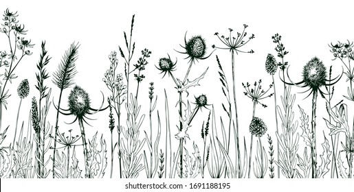 Seamless horizontally background with green wild herbs and flowers. Hand drawn botanical illustration isolated on white.