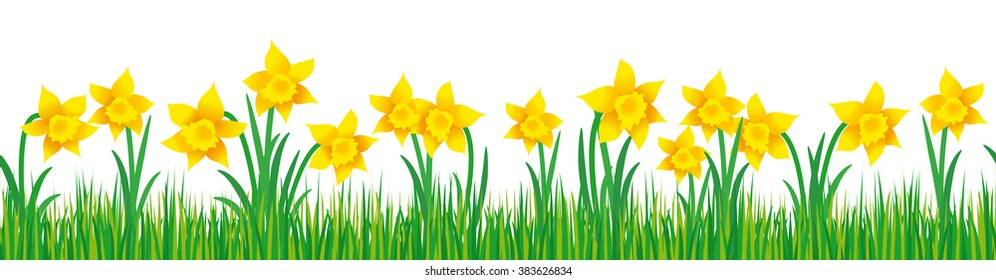 Seamless illustration of daffodils in green grass on white background; Banner with springtime motif