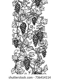 Seamless illustration of vertical grape vine. Hand drawn vector sketch.