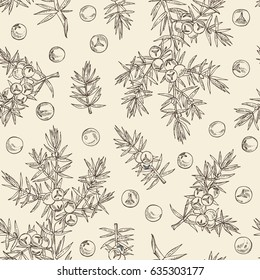 Seamless with juniper: berries juniper and a branch. Cosmetics and medical plant. hand drawn.