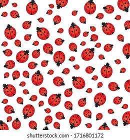 Seamless ladybird, ladybug pattern on white background