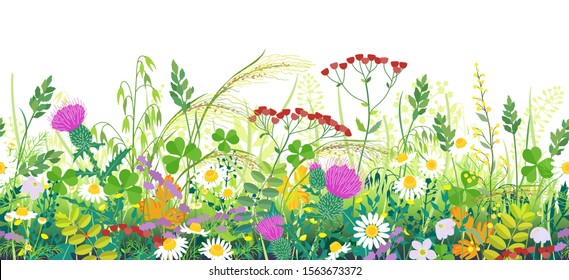 Seamless line horizontal border made with summer meadow plants. Green grass and wild flowers in row on white background.  Floral natural pattern vector flat illustration.