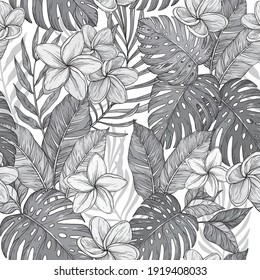 Seamless monochrome background of flowers frangipani, plumeria tropical flower, Vector illustration.