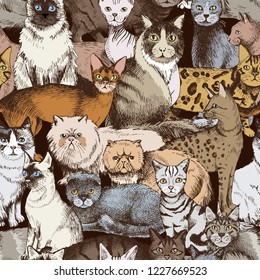 Seamless pattern with 16 colorful hand drawn purebred cats. Vector illustration