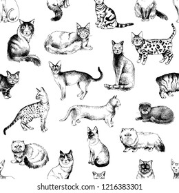 Seamless pattern with 16 hand drawn purebred cats. Vector illustration