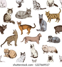 Seamless pattern with 16 hand drawn colorful purebred cats on white background. Vector illustration