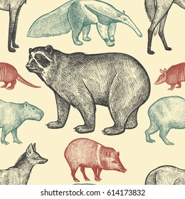 Seamless pattern with animals South America. Spectacled Bear, Peccary, Capybara, Armadillo, Maned Wolf, Anteater on pastel background. Vector illustration art. Black, red,blue. Vintage engraving.