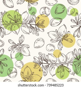 Seamless pattern with argan: leaves and argan nuts. Cosmetic and medical plant. Vector hand drawn illustration.