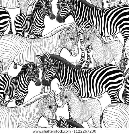 Zebra Food