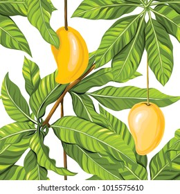 Seamless pattern, background with mango on white background.  Hand drawn colorful vector illustration without transparent and gradients.