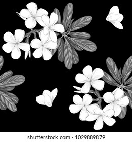 Seamless pattern, background with white plumeria on black background.  Hand drawn monochrome vector illustration without transparent and gradients.