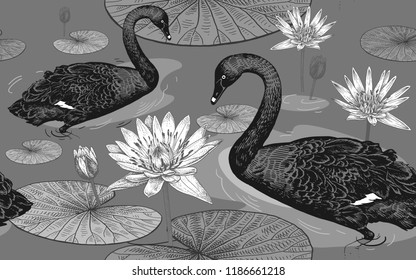 Swans On Pond Flower Exotic Bird Outdoor Wall Picture Black Frame Art Print Home Décor Garden Poster
