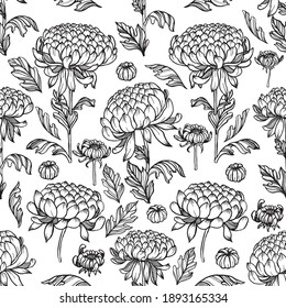 Seamless pattern with black outlined chrysanthemum flowers, buds, and leaves on white isolated background. Beautiful vector texture