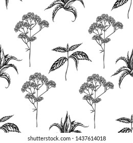 Seamless pattern with black and white aloe, nettle, valerian