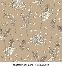 Seamless pattern with buckwheat: plant and buckwheat groats. Vector hand drawn illustration