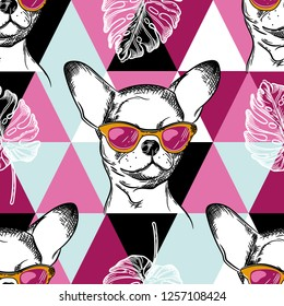 Seamless pattern with chihuahua dog in in pink glasses. Background with pink triangles. Patchwork picture.