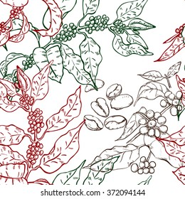 Seamless pattern with coffee plants: berries, grains