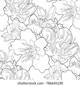 seamless pattern coloring flower of the almond blossoms a nut. vector illustration